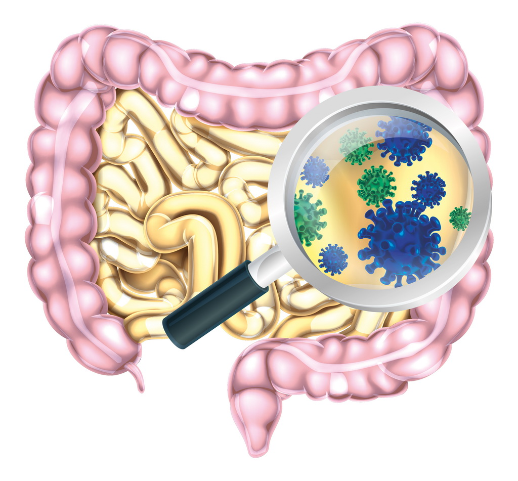 Immune System And Gastrointestinal >> Allergy The Immune Gut Interplay Danone Nutricia Research