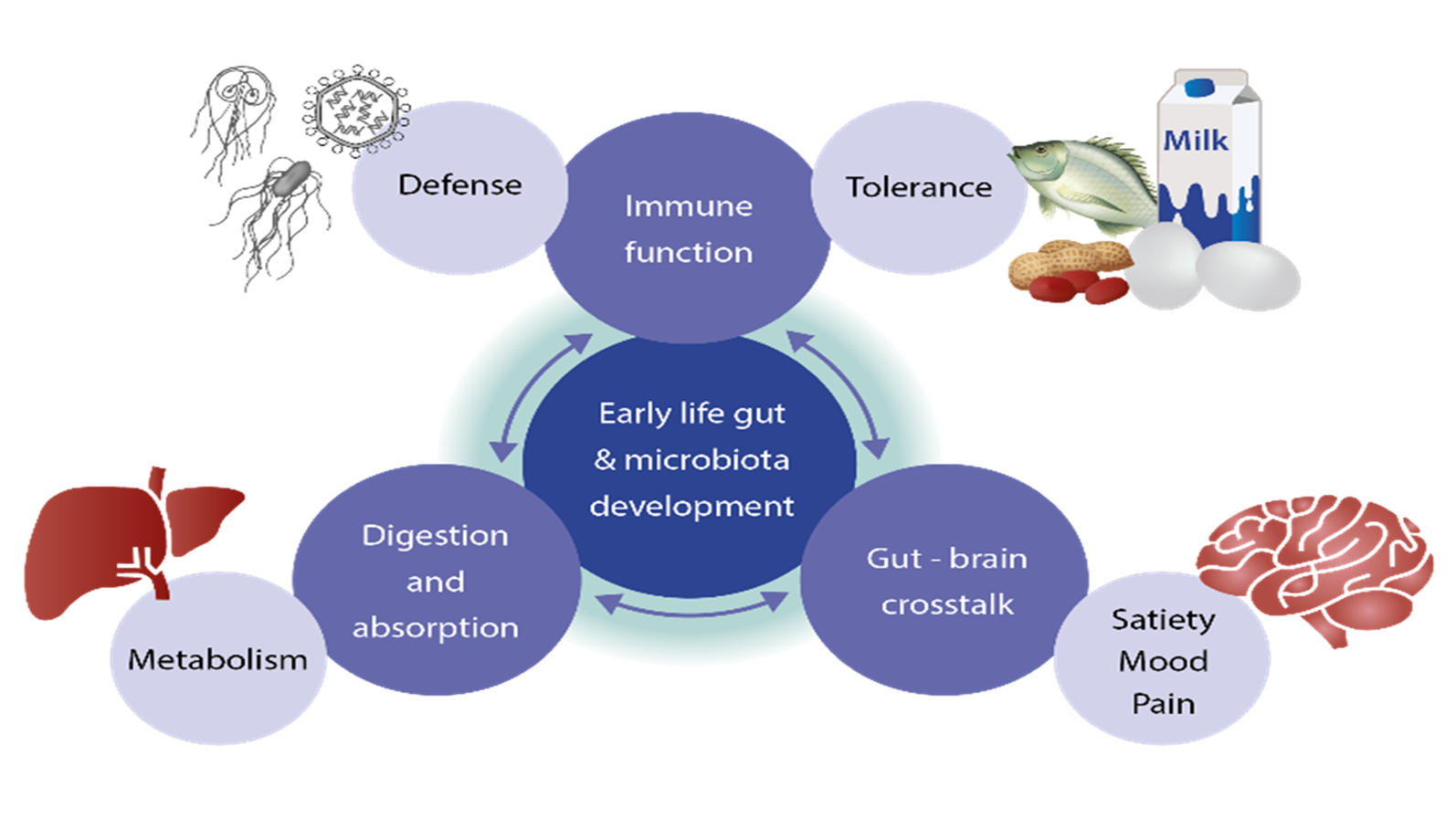 The Central Role Of The Gut Danone Nutricia Research